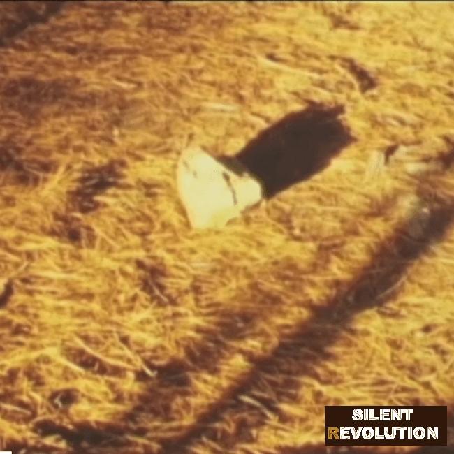 Silent Revolution film